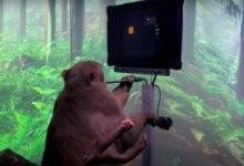 Photo of قرد حصل على شرائح Neuralink يتحكم بالألعاب الالكترونية